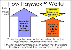 how-haymax-works-diagram